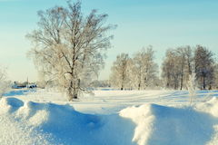 Frosty morning. Snow white mashed snowdrifts in forest-steppes of Altai Stock Image