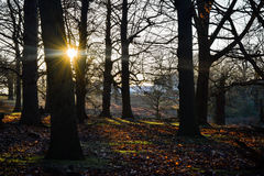 Frosty Morning Sunshine Stock Photography