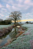 Frosty morning, tree river reflections. Tree and bridge reflected in the River Eden in Surrey UK on a winters frosty morning at dawn stock photos
