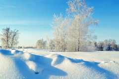 Frosty morning. In the winter morning the sun rises over trees in the steppe Royalty Free Stock Photos