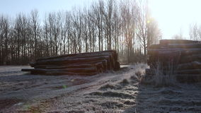 Frosty morning winter sunrise in countryside with path, trees and logs stock footage