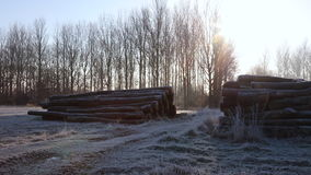 Frosty morning winter sunrise in countryside with path, trees and logs stock video