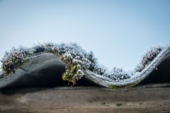 Frosty moss on the roof. Winter in village. Frosty moss on the roof Stock Image