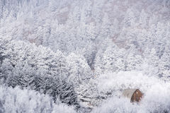 Frosty Mountain Day Stock Image