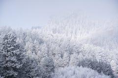 Frosty Mountain Day Royalty Free Stock Photo