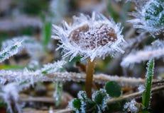 Frosty Mushroom Royalty Free Stock Photography