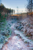 Frosty path Stock Photos
