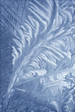 Frosty pattern Stock Photography