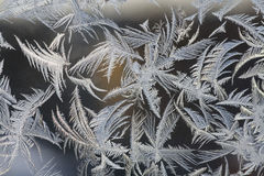 Frosty pattern Royalty Free Stock Image