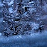 Frosty pattern on a glass royalty free stock photography