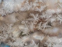 Elegant patterns of frost on the window Royalty Free Stock Images