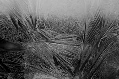 A frosty picture on a window Royalty Free Stock Photos