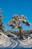The frosty pine... A single pine tree close to a winter road with trails and a pale moon in the blue sky, it is winter in Uppland, Sweden stock photography
