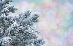 Frosty pine twigs against abstract pastel bokeh background royalty free stock photo