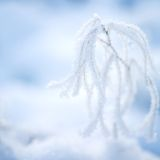 Frosty plant Stock Image