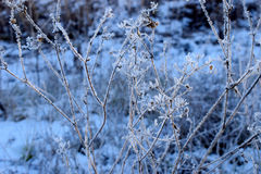 Frosty plant Stock Images