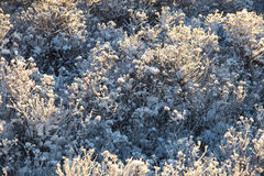 Frosty plants a sunny winter day Royalty Free Stock Photography