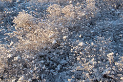 Frosty plants a sunny winter day Royalty Free Stock Images