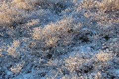 Frosty plants in winter on a sunny day Stock Photography