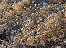 Frosty plants in winter on a sunny day Royalty Free Stock Photos