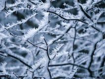 Frosty Rime Royaltyfria Bilder