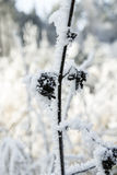 Frosty rime Royalty Free Stock Images