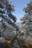 The frosty Rime in Wulao Feng of Lushan mountain in winter Stock Photos