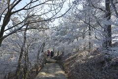 The frosty Rime in Wulao Feng of Lushan mountain in winter Stock Photo