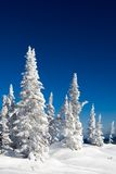 Frosty scenery Royalty Free Stock Photos