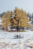 Frosty seat for fall colours. Snow on picnic table, Kananaskis, Country, Alberta, Canada Stock Photo