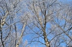 Frosty sky royalty free stock images