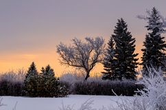 Frosty, snowy night with a purple sky, Christmas tree at night stock photos