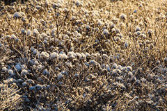 Frosty and snowy plants in sunlight Stock Photos