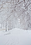Frosty snowy winter street forest Royalty Free Stock Photography