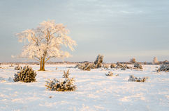 Frosty solitude tree in the first morning sunshine. Winter landscape with a solitude frosty tree in the first morning sun Royalty Free Stock Photo