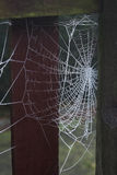 Frosty spider web Stock Photography