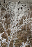 Frosty spider web. Poland,autumn.Frosty morning on the meadow near Bug river Royalty Free Stock Photos