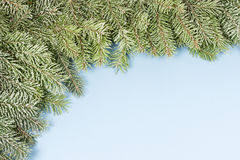 Frosty Spruce. Stock Images