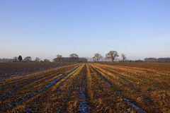 Frosty straw stubble Stock Images