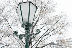 Frosty street lamp on a cold winter day Royalty Free Stock Photos