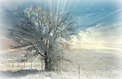 Frosty Sunburst Silhouettes un arbre avec les nuages et la neige photographie stock libre de droits