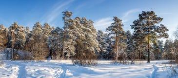 Frosty Sunny dag i Uralsna en skog med en djupfryst flod, Ryssland arkivbild