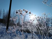Frosty sunny day stock photography