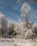 frosty sunny day in the winter forest /the snow wood in sunny day stock image