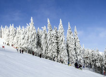 Frosty sunny winter day. Northern Beauty Asian mountains. Stock Photo