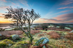 Frosty Sunrise at Helman Tor HDR. A frosty March sunrise at Helman Tor a craggy outcrop of rugged moorland near Bodmin in Cornwall, an HDR image Royalty Free Stock Photos