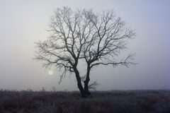 Frosty sunrise and lonely tree - winter background Stock Photography