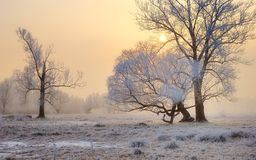 Frosty sunset with trees Stock Photography