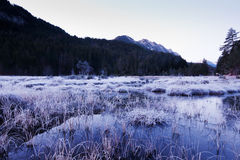 Frosty swamp in winter scenery Stock Photography