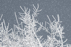 Frosty tree royalty free stock image